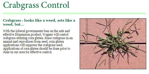 WLC-Services_Crabgrass_Control